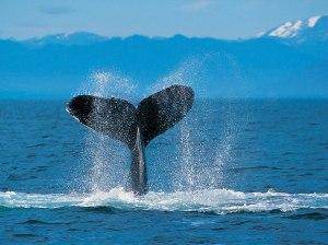 Whalethunder